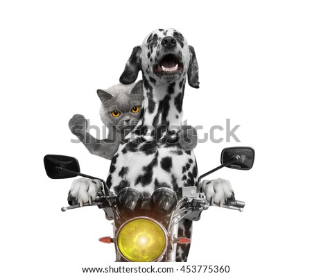 happy dog and cat ride on a motorcycle -- isolated on white - stock photo