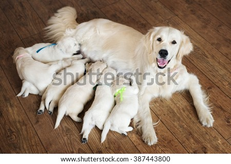 Happy dog feeding her puppies