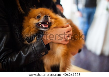 Happy dog in the hands of its owner