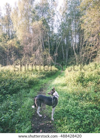 happy dog is looking for direction in forest on blur background - vintage look