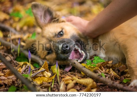 Happy dog laying on ground in forest and being pet by its owner during autumn. Colorful flowers and fallen leaves all around.