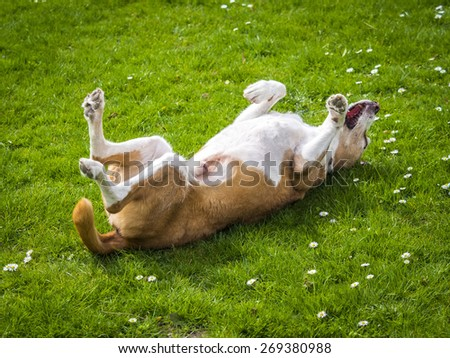 happy dog on a sunny day - stock photo