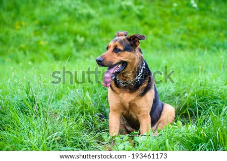 Happy dog on green grass