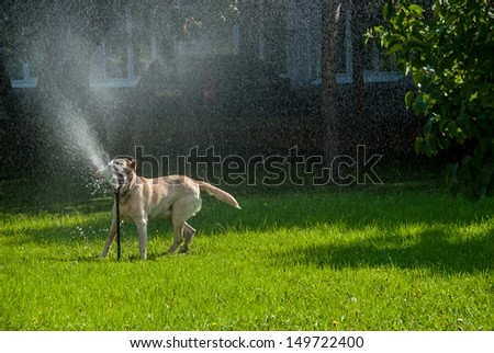 Happy dog play in the meadow with a watering fountain - stock photo