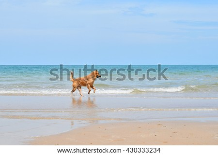 Happy dog playing at the beach