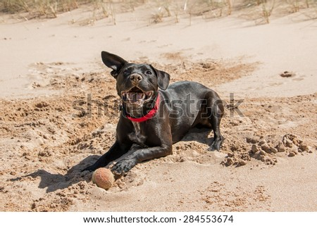 Happy dog playing with ball at the beach - stock photo