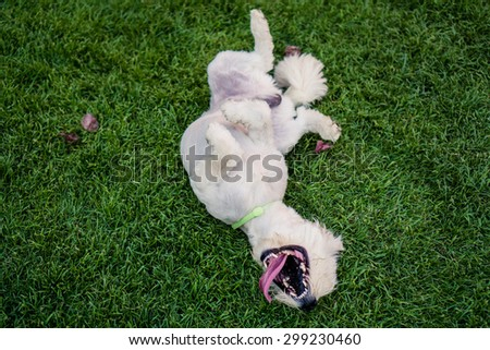 Happy dog rolling on the grass - stock photo