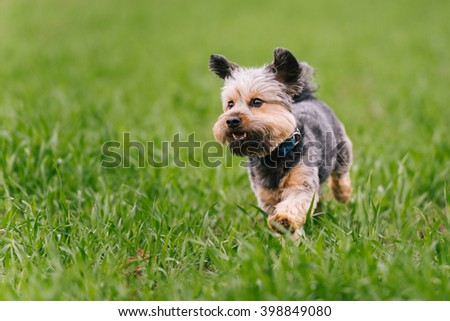 Happy dog running on green grass - stock photo