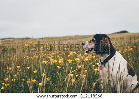 Happy dog sitting in a field