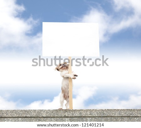 happy dog standing on the wall and showing blank billboard - stock photo