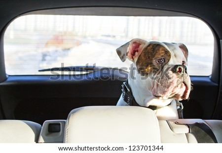 Happy dog traveling in the car boot - stock photo