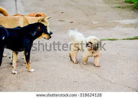 Happy  dogs playing  - stock photo