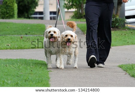 Happy Dogs Walking outdoors on lead - stock photo