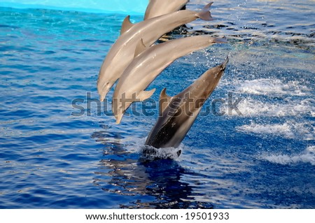 happy dolphins jumping