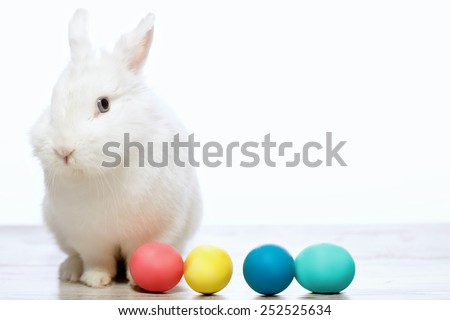 Happy Easter. Closeup image of a cute white bunny Easter eggs sitting near the row if multicolor Easter eggs isolated on white background - stock photo