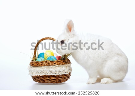 Happy Easter. Closeup image of a cute white bunny looking in the cane basket full of colored Easter eggs isolated on white background - stock photo