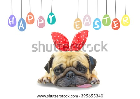 Happy Easter Day. Young cute dog puppy Pug wearing rabbit bunny ears sitting next to a pastel colorful of eggs with copy space. - stock photo