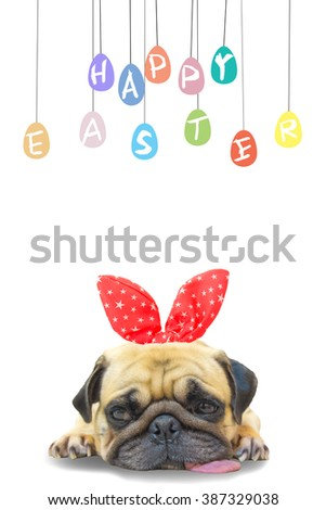 Happy Easter. Dog Pug wearing rabbit bunny ears sleep rest near pastel colorful of eggs with copy space. - stock photo