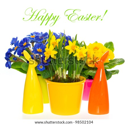 Happy Easter! primulas and narcissus in pot on white background. spring flowers with easter bunny  decoration - stock photo