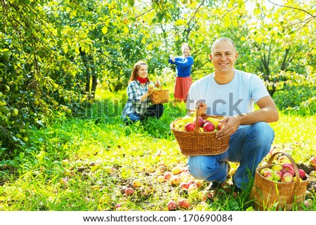 Happy family gathers apples in the garden - stock photo