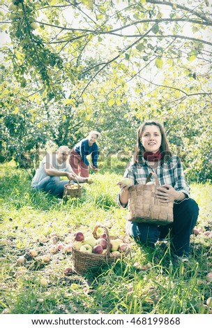 Happy family gathers apples in the garden