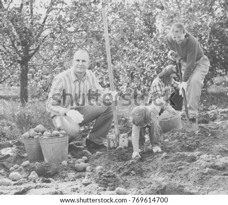 Happy family harvesting potatoes in vegetable garden