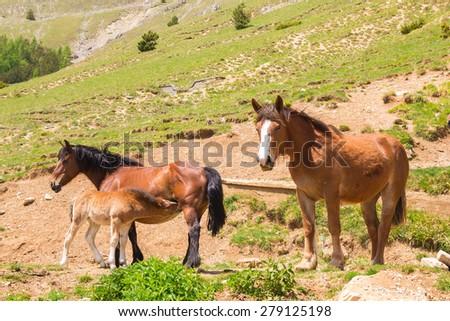 Happy family of horses  - stock photo