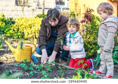 Happy family of three: Two little boys and father planting seeds and seedlings in vegetable garden, outdoors - stock photo