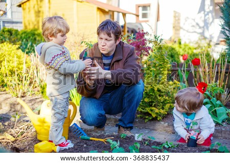 Happy family of three: Two little kids boys and dad planting seeds and seedlings in vegetable garden, outdoors. Man and sons, twins having fun with gardening in spring.