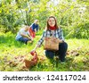 Happy  family picks apples in the orchard - stock photo