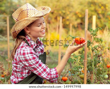 Happy female gardener enjoying tomato harvest in the yard. Young Caucasian blonde picking vegetables in the garden.