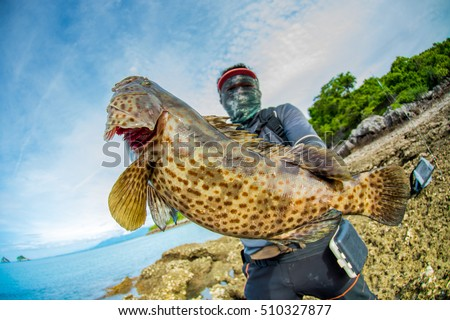 Grouper stock photos royalty free images vectors for Breeding pond fish