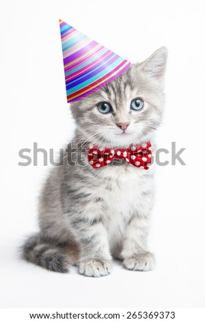 Happy grey striped kitten with a celebration hat and a red bow tie sitting on a white background