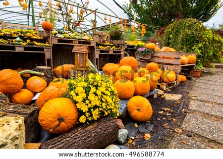 Happy Halloween, Pumpkin (winter squash or Cucurbita pepo) autumn food vegetable, ideal for seasonal kitchen and halloween festival, in the garden with flowers