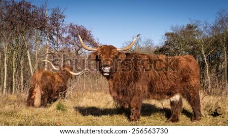 Happy highlander - stock photo