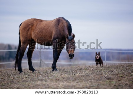 Happy horse and dogs - stock photo
