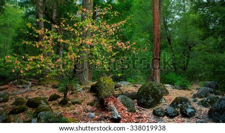 Happy Isles in Yosemite Valley.  Yosemite National Park California, USA - stock photo