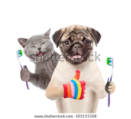 Happy kitten and pug puppy holding a toothbrushes and showing thumbs up. isolated on white background