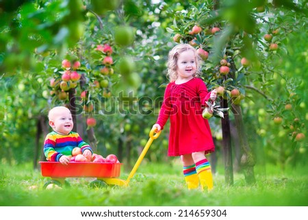 Happy little children, cute toddler girl and adorable funny baby boy, playing together in a beautiful fruit garden eating apples having fun on a wheel barrow ride enjoying a warm autumn day outdoors  - stock photo