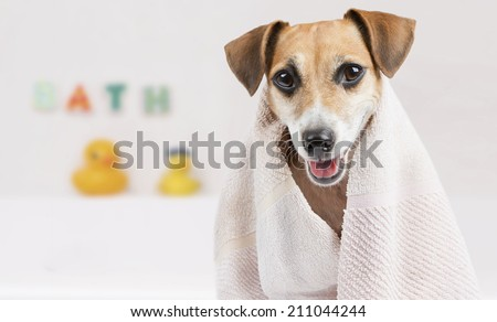 Happy little dog in the bathroom after a bath wrapped in a towel - stock photo