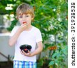 Happy little kid boy picking and eating fresh ripe tomatoes vegetables  in greenhouse. Preschool child helping on sunny summer day. Family, garden, gardening, lifestyle - stock photo