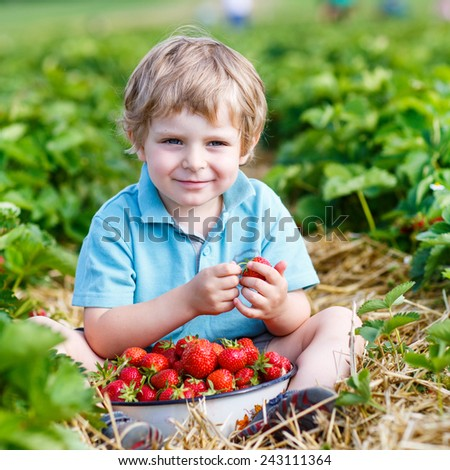 Happy little toddler boy on pick a berry farm picking strawberries in bucket, outdoors. Funny kid eating fresh organic berries. On sunny warm summer day. - stock photo