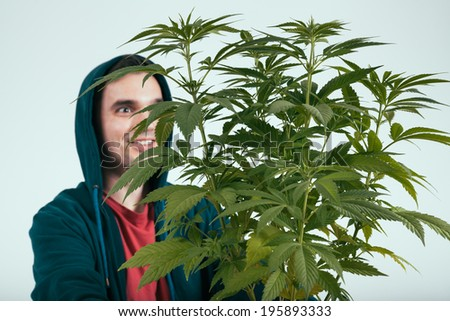 Happy man and cannabis plant.