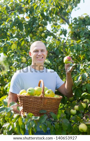 Happy man is picking of apples in the orchard