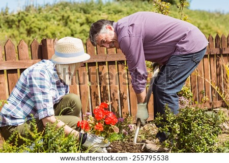 Happy mature couple gardening together outside in the garden - stock photo