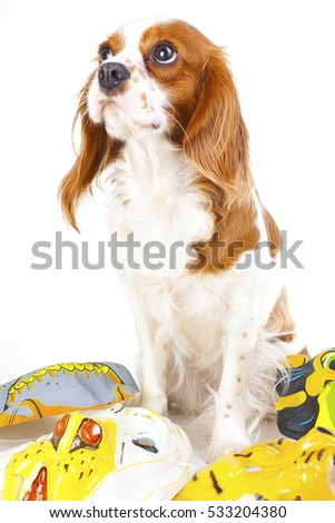 Happy new year! Illustrate your work with king charles spaniel New year illustration.  Dog celebrate New year's eve with sylvester trumpet.