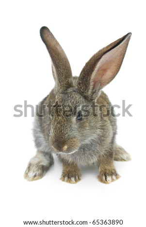 Happy New Year of rabbit isolated on a white background
