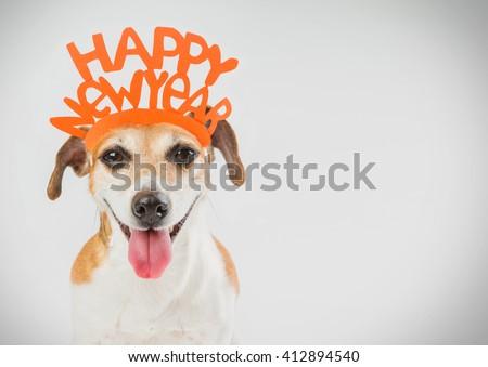 Happy New year party dog card. Horizontal. Grey ( gray ) background orange word on the head.  - stock photo
