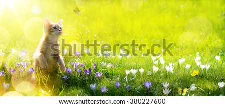 happy playing Cat on green spring  background - stock photo