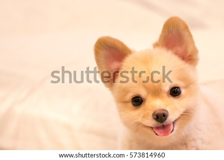 Travieso im genes pagas y sin cargo y vectores en stock shutterstock - Dogs for small spaces concept ...